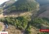 Вирубка карпатських лісів