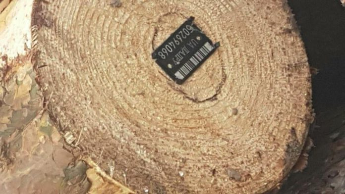 деревина на Прикарпатті