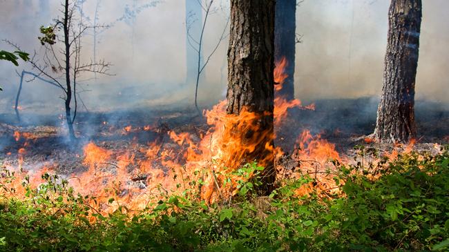 На Прикарпатті понад 50 осіб від п'ятниці гасять лісову пожежу