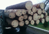 чіпована деревина