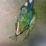 Франківців просять впізнати вандалів, які пошкодили динозавра у міському парку