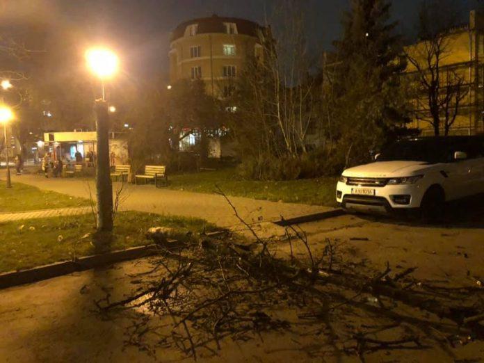 Через сильний вітер у Франківську на Коновальця впало дерево
