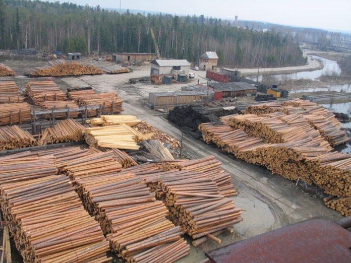 Під виглядом збереження лісів Рада спростила вирубку Карпат – екологи