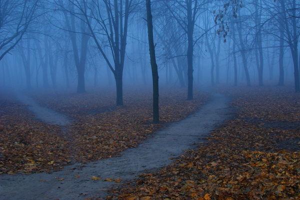 У неділю та понеділок на Прикарпатті очікується густий туман