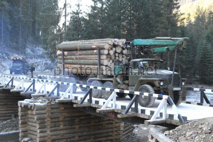 На Прикарпатті в одному із лісгоспів правоохоронці проводять санкціоновані обшуки