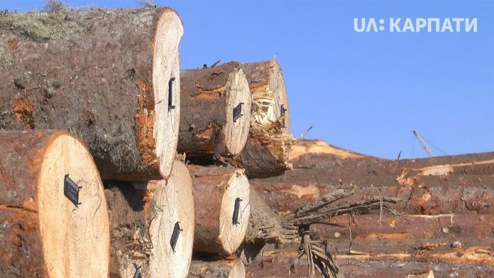 Усю зрубану на Прикарпатті деревину чіпуватимуть