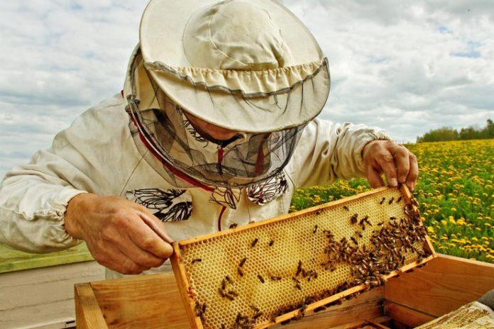 Долина інвестує у бджіл. Пасічники з Прикарпаття за грант збиратимуть лісовий мед