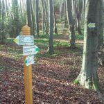В НПП «Гуцульщина» облаштовано новий еколого-пізнавальний маршрут