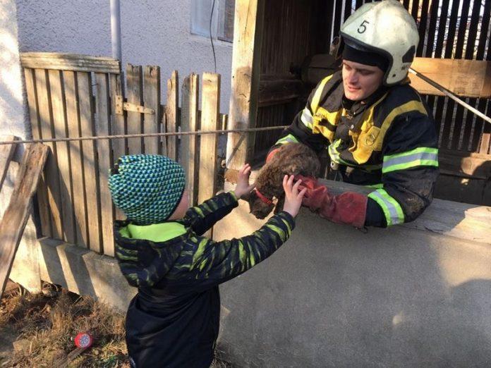 У Надвірній рятувальники діставали з колодязя кошеня