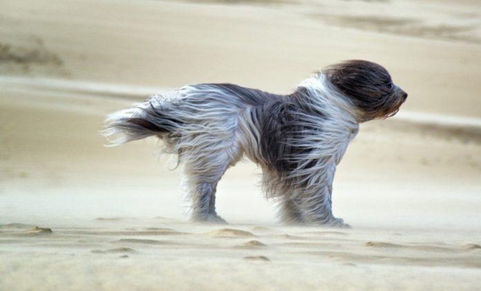 Лавини та шквальний вітер. Прикарпатців попереджають про погіршення погоди