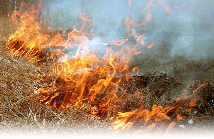 В передмісті Івано-Франківська невідомі підпалили 1 гектар сухої трави