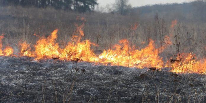 Минулої доби на Прикарпатті було зафіксовано 30 пожеж - з низ 29 підпалів сухої трави