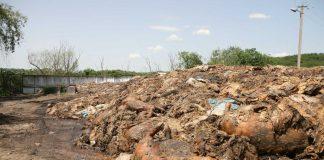 Держспоживслужба б'є на сполох: на Прикарпатті необхідно утилізувати близько 24 тисяч тонн відходів тваринного походження
