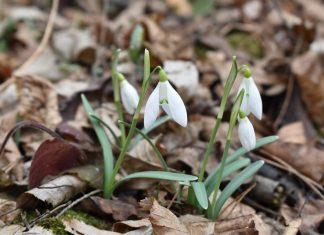 У Галицький природний парк прийшла справжня весна