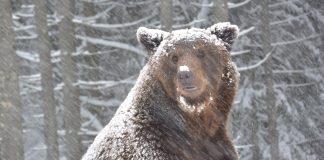 Прикарпатські лісівники порахували скільки на території області проживає дикої мисливської звірини