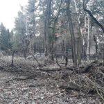 Вчорашня негода наробила шкоди у центральному парку Івано-Франківська: фоторепортаж