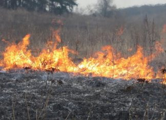 """Попри всі прохання та застереження прикарпатські """"ґазди"""" і надалі підпалюють суху траву"""