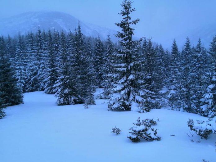 У Карпатах випало до метру снігу: існує небезпека сходження лавин