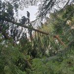 На Богородчанщині дерево завалило приміщення недіючої їдальні