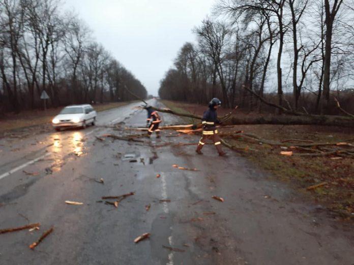 На Тисмениччині перед рейсовим автобусом впало дерево, є потерпілий