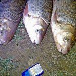 На Дністрі браконьєри завдали збитків на 60 тисяч гривень