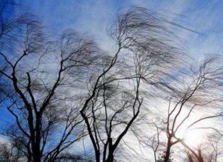 Через сильний вітер на Прикарпатті оголошено штормове попередження