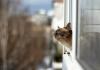 Синоптики розповіли, якою буде погода в Івано-Франківську в останній день зими