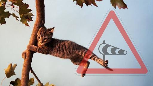 Через сильний вітер на Прикарпатті оголосили штормове попередження