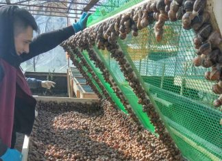 Як працює друга равликова ферма на Прикарпатті «УхТи Равлик»