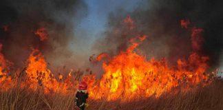 За минулу добу на Прикарпатті трапилося 44 пожежі сухої трави
