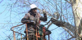 У Франківську тривають роботи щодо обрізки дерев