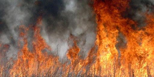 Байдужі до природи прикарпатці і далі підпалюють суху траву