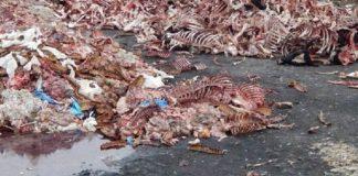 В передмісті Івано-Франківська горе-бізнесмени викинули на берег Бистриці дві машини тваринних решток: фотофакт