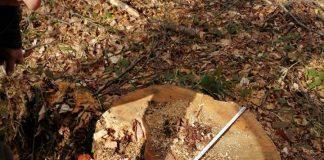 У Болехівському лісгоспі завдали шкоди довкіллю на майже мільйон гривень