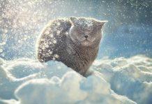 Синоптики обіцяють українцям похолодання зі снігом