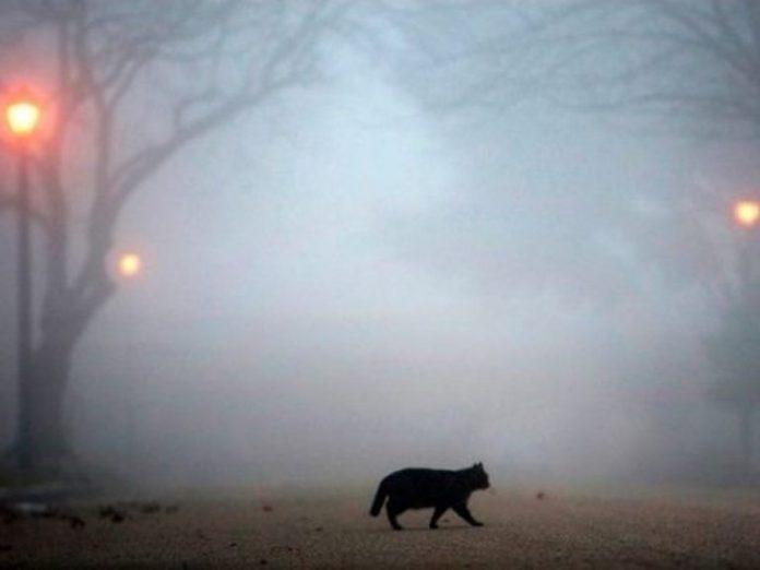 Прикарпаття накриє густий туман
