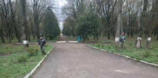 В Рогатинському районі лісники оновили ялинову алею