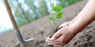Цієї весни прикарпатські лісники планують заліснити близько 600 гектарів молодих лісів