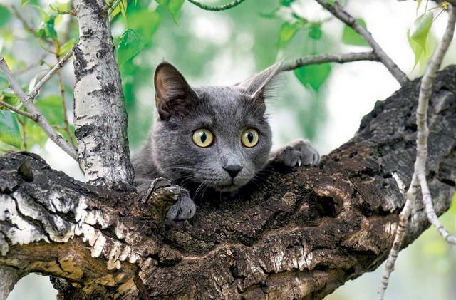 У Франківську МАРСіани знімали кота з дерева