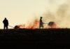 Прикарпатські ґазди-рагулі і надалі підпалюють суху траву - за минулу добу 43 пожежі