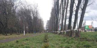 Лісівники оновили ялинкову алею у рогатинському парку