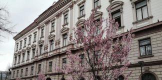 В Івано-Франківськ прийшла справжня весна: красиві фото