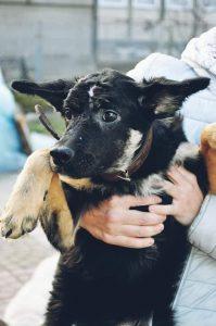 206 котів і собак потрапили у добрі руки завдяки  Дому Сірка