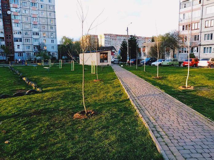 Акації, клени, платани. Франківські комунальники висадили більше трьох сотень саджанців дерев