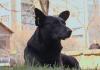 Від початку карантину в Франківську зросла кількість безпритульних тварин: відео