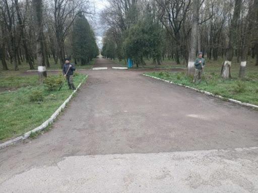 У міському парку Рогатина оновили алею ялинок: фотофакт