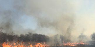 Люди, схаменіться: за минулу добу на Прикарпатті трапилося 14 пожеж сухої трави