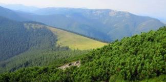 Цьогоріч у Карпатах висадили понад 2 мільйони дерев