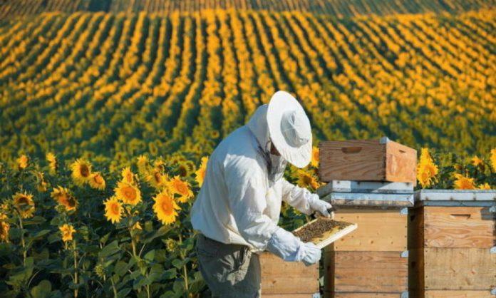 На Прикарпатті пасічникам виплатять дотації за бджолосім'ї