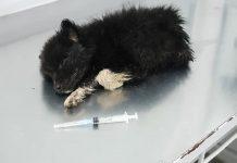 Франківські волонтери попереджають про жорстоку садистку, котра знущається над тваринами: фото, відео